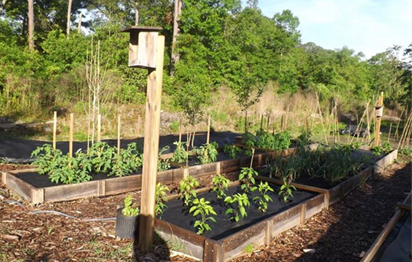 Greenhouse Garden 2 IMG_0512
